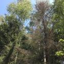 В лесу мониторится просто ужасающая ситуация